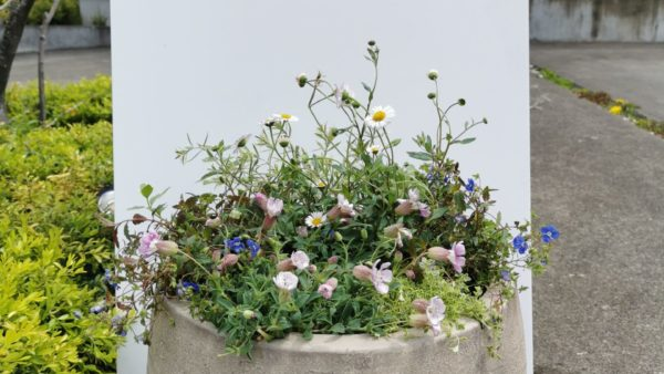 【花壇のリフォーム】と寄せ植えの作成